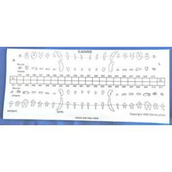 Dental chart stick-on labels - starter Kit. (25 dog | 25 cat)