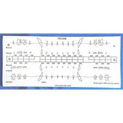 Dental chart stick-on label refills (50 cat)