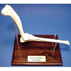 Osteo-Model - canine elbow