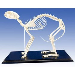 Cat Skeleton (Plastic)