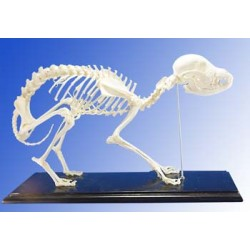 Dog Skeleton (Plastic)